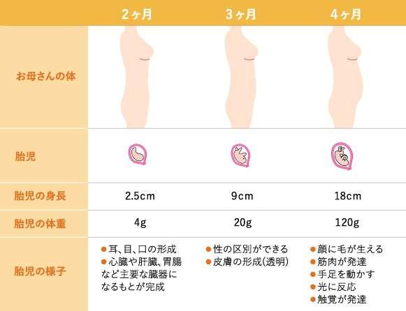 妊娠2~4カ月