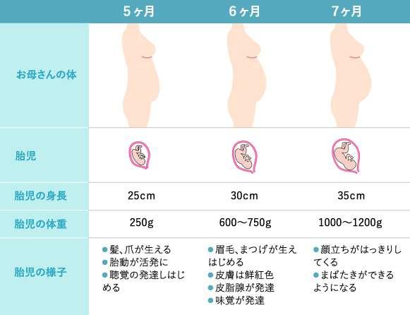 妊娠5~7カ月