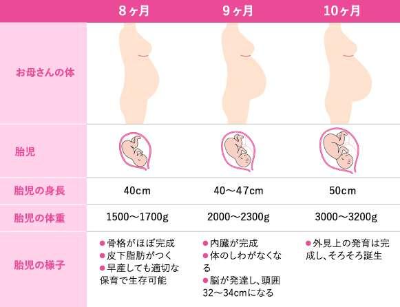 妊娠8~10カ月