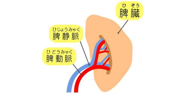 7割切り取っても再生可能!? 身近なスゴイ臓器「肝臓」をもっと知ろう