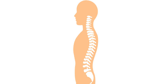 脊髄の構造