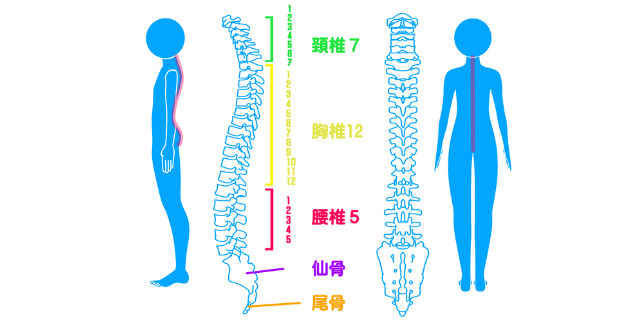 頚椎の名称