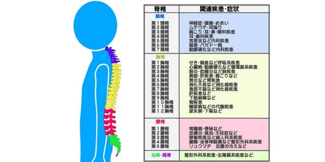 脊髄の部位ごとの疾患