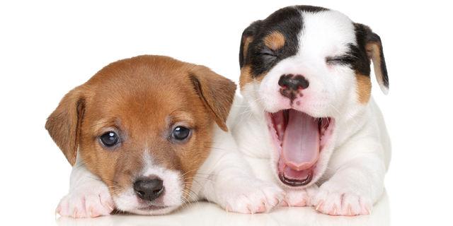 犬のあくび
