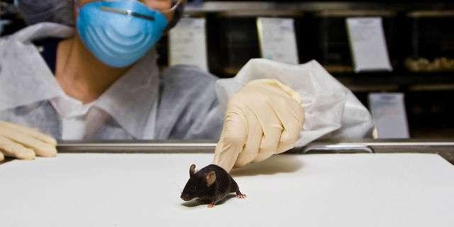 マウスの実験