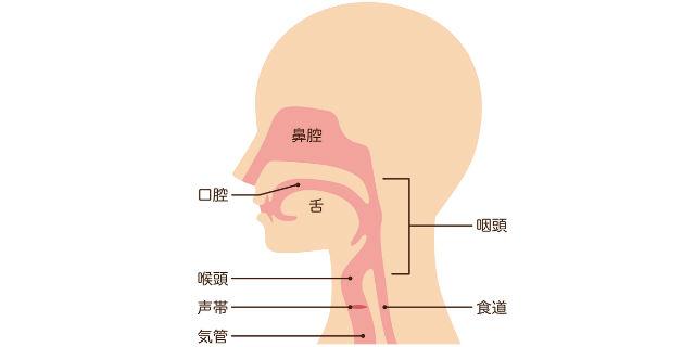喉の仕組み