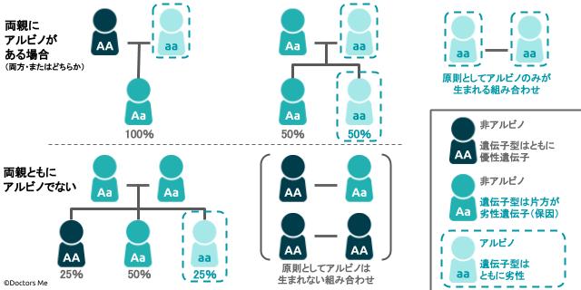 遺伝を説明する家系図