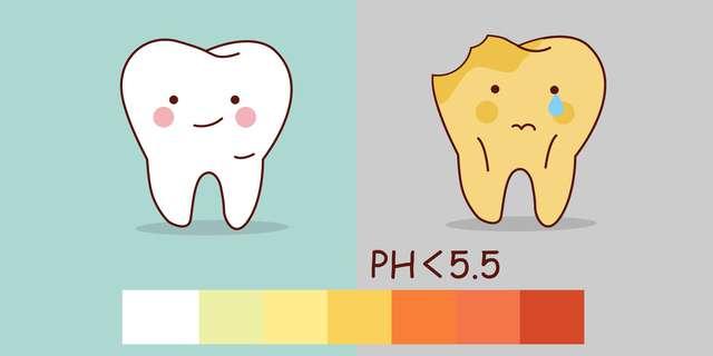 通常の歯と酸性の歯