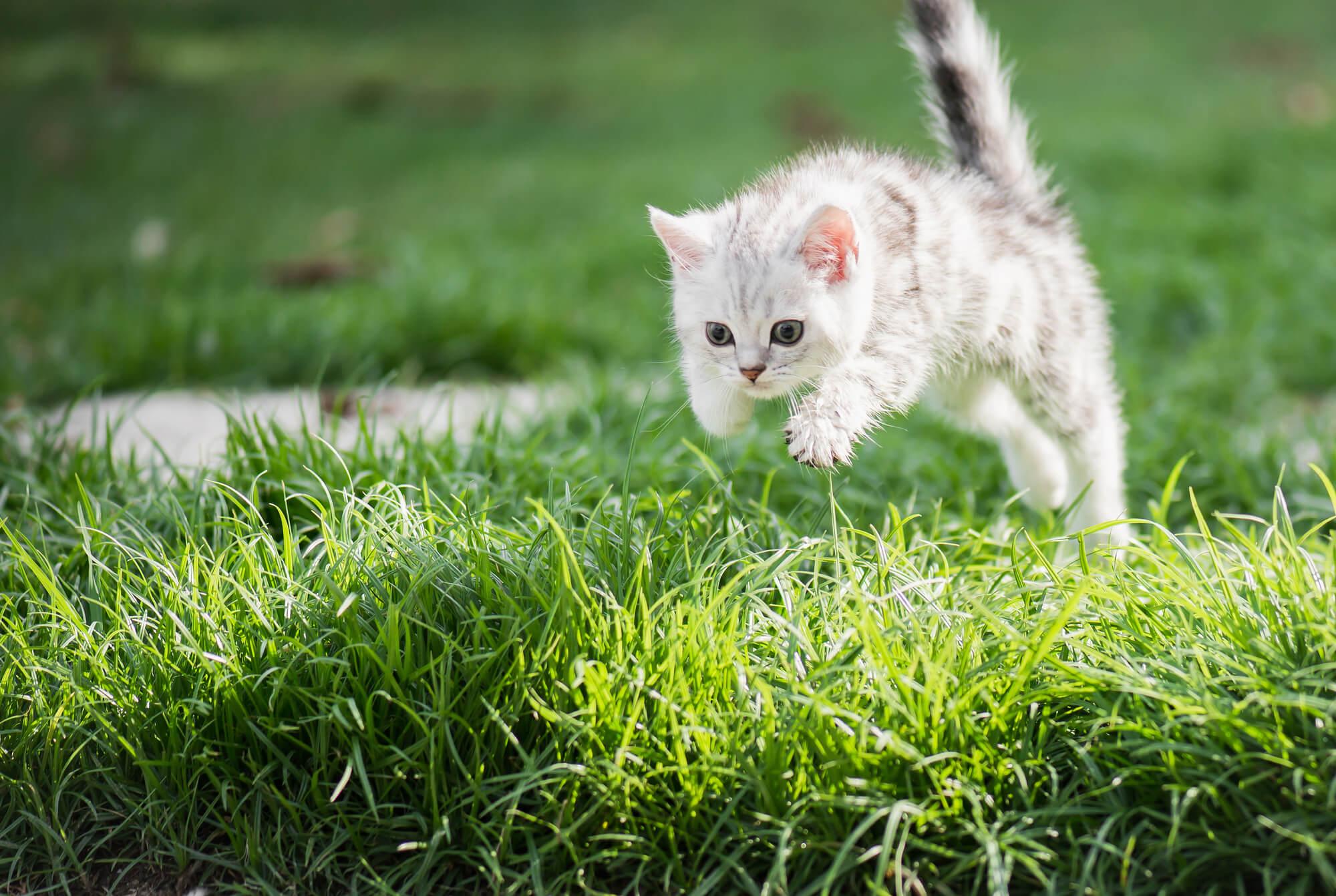 猫の体重管理が大切