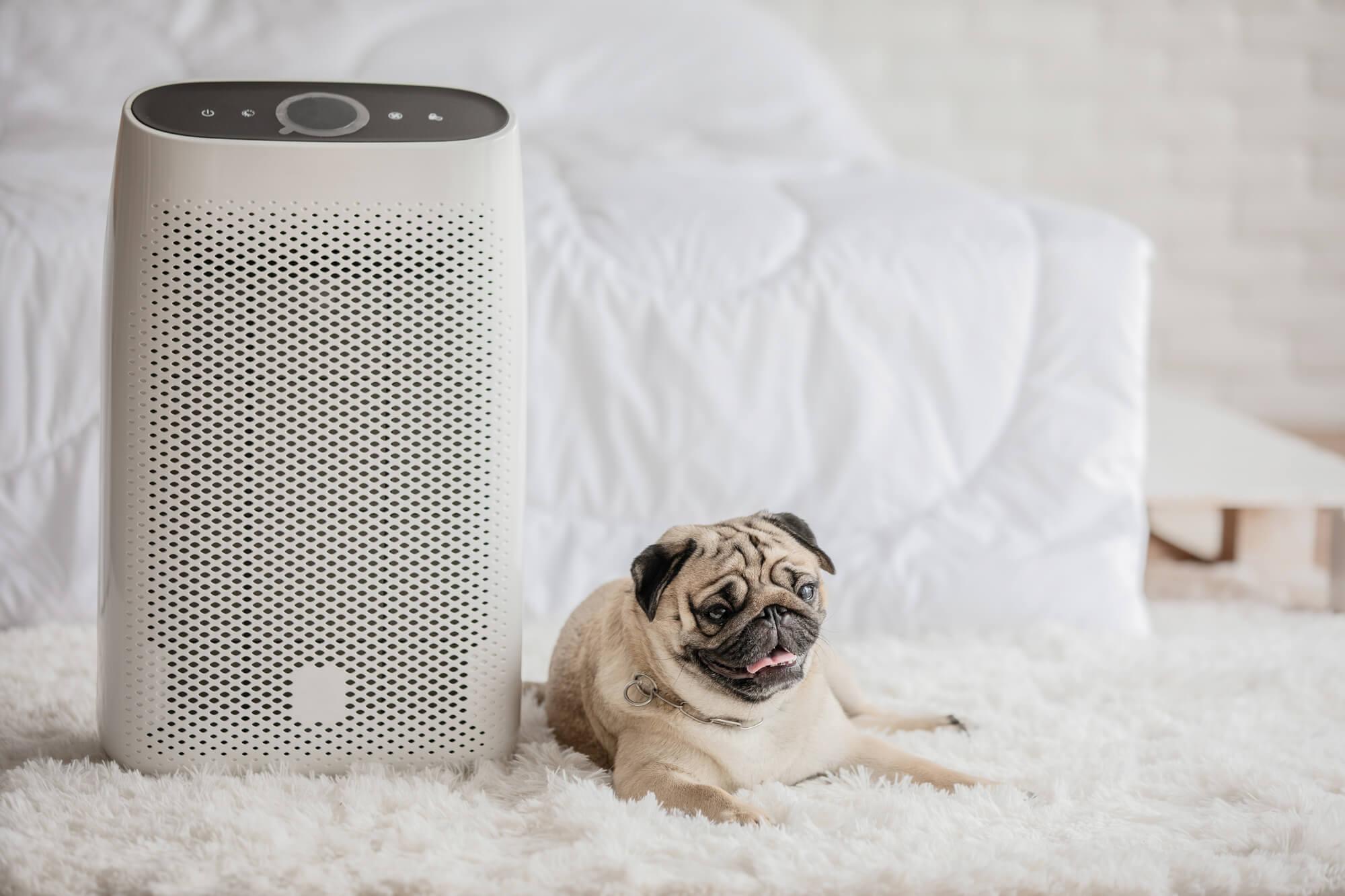 犬の過ごしやすい冬の暖房