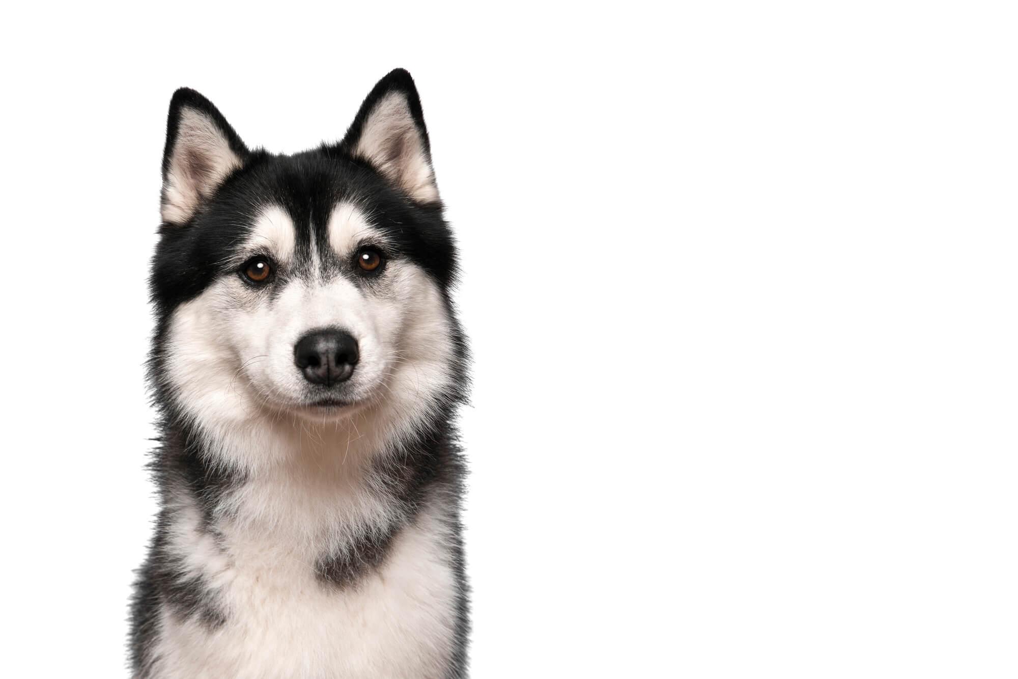 寒さに強い犬種は?