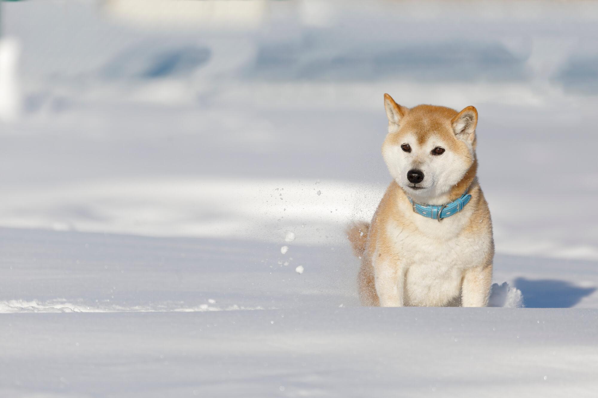 ペットは寒さに強い?弱い?