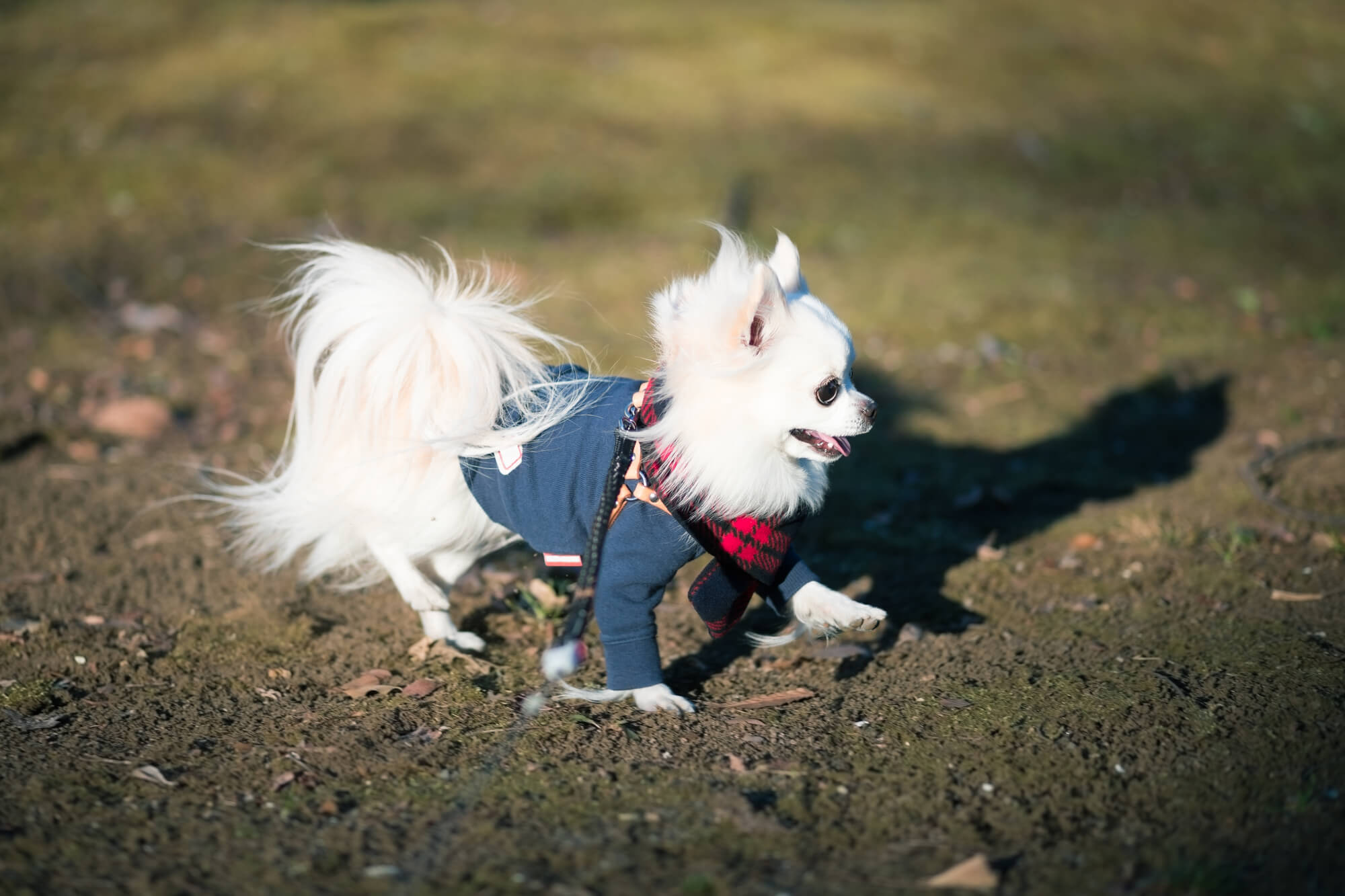 冬の犬の散歩