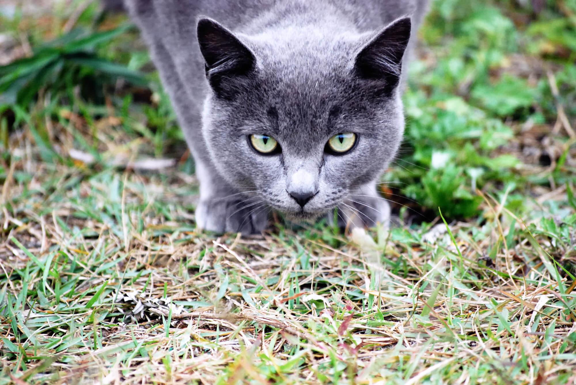 野生の猫のイメージ画像