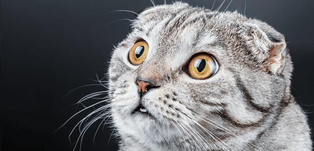 猫ちゃんの目の中が白く濁っている……それって【白内障】かも!