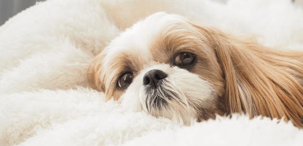 サインを見逃すな! 意外と知られていない、愛犬の嘔吐と病気のカンケイ