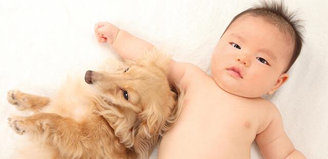 赤ちゃんとペット、スキンシップで菌はうつらない!?