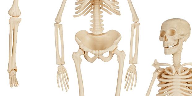 骨がスカスカになる? 骨粗しょう症ってどんな病気!?