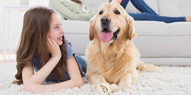 屋内犬が快適に過ごすせる理想の飼育スペースを作ろう!