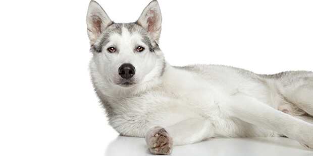 犬のジアルジア症ってどんな病気? その治療法は?
