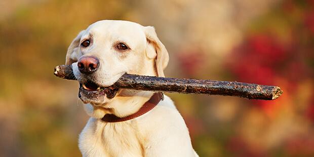 散歩中、愛犬が他の犬に噛まれてしまったら…必ずチェックしたい4つのポイント