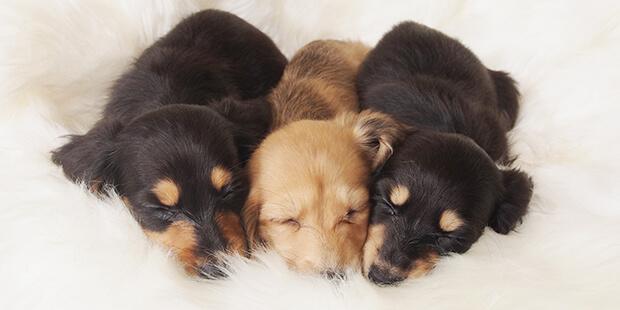 ペットを飼おうと思い立ったら、どうやって選べばいいの?