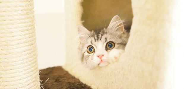 """猫の""""おトイレそそう""""を治す方法とは?"""