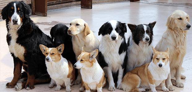 犬同士のトラブルを解消!犬を多頭飼いする際のポイントは?