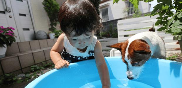 犬の皮膚トラブル、多発の膿皮症(のうひしょう)に要注意!