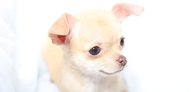 知っておきたい犬のがんの治療と予防!