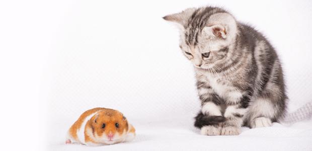トムとジェリー?猫とハムスターを一緒に飼うには?