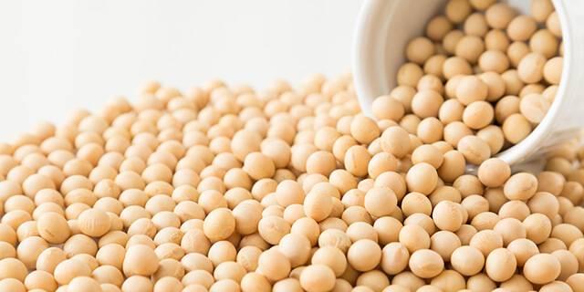 たくさんの大豆