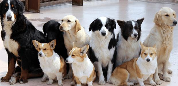 初めて犬を飼う際の犬選びのポイントは?