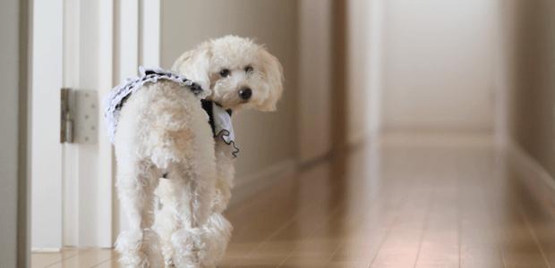 慢性化に注意!犬の膀胱炎
